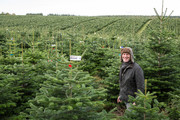 Kjeld Kristensen, Christmas Tree Supplier - Christmas 2017