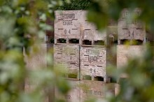 Waitrose & Partners Plants its Own Truffle Tree Orchard in Supermarket First